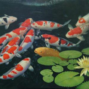 family-pet-koi-fish-ma