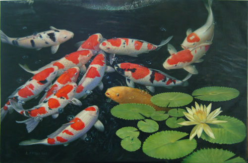 Pet Koi | Koi Pond Plants Family Pet Garden Center Pembroke Ma