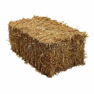 hay straw family pet ma